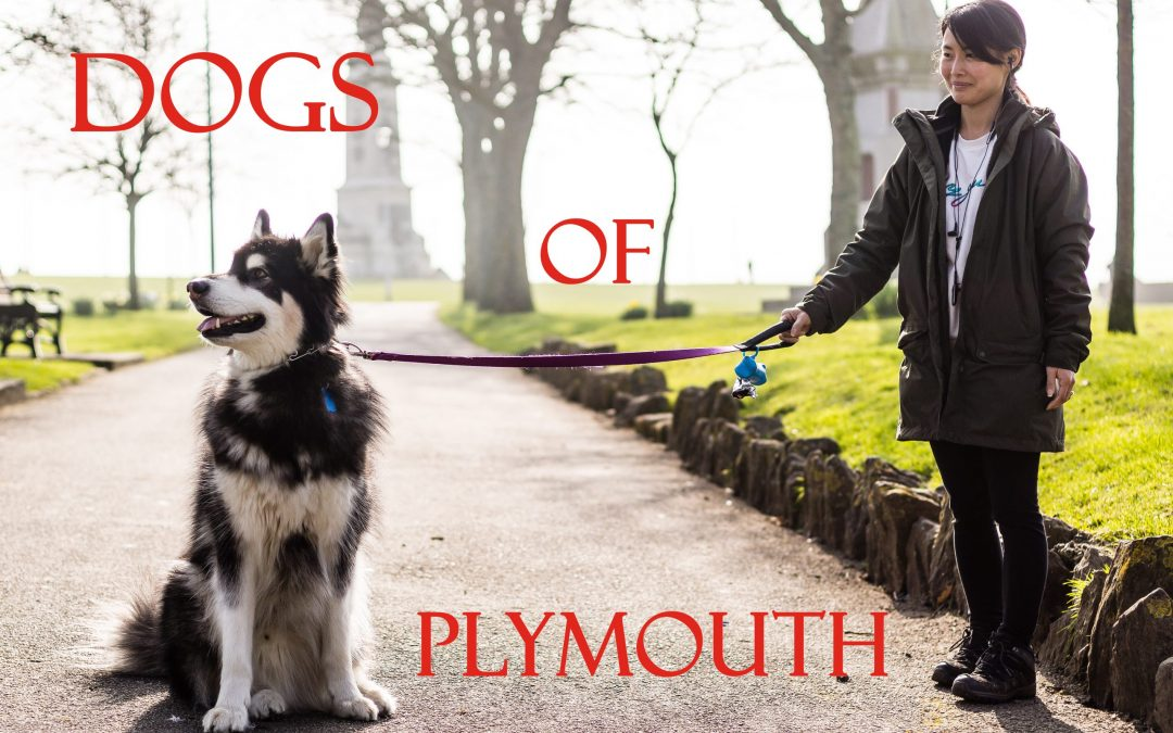 Dogs of Plymouth