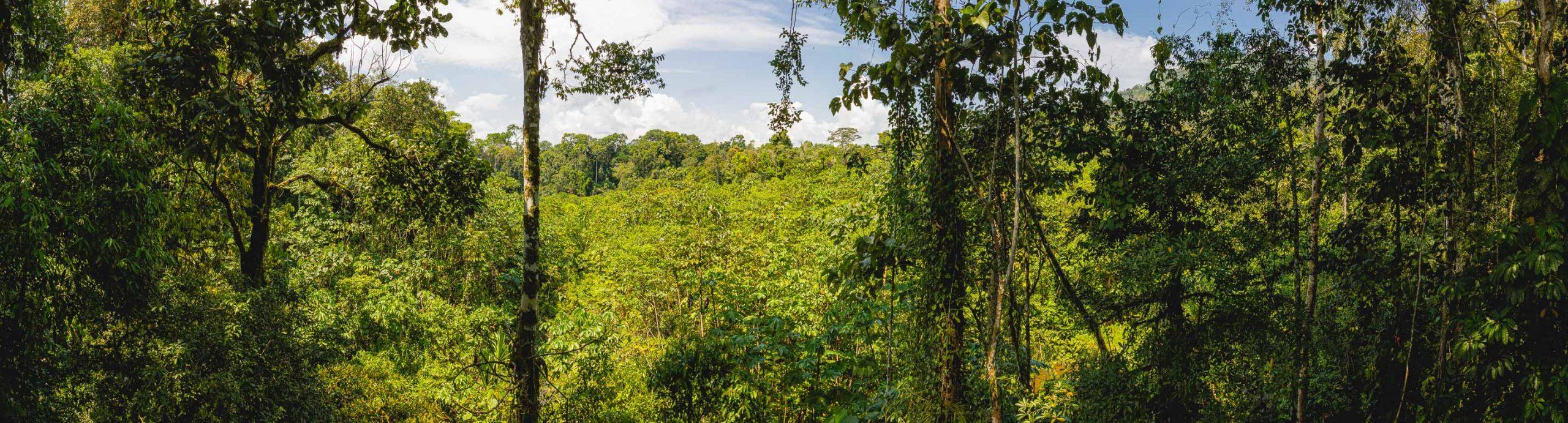 MIRADOR ATALAYA (WATCHTOWER LOOKOUT) – THE AMAZON BASIN