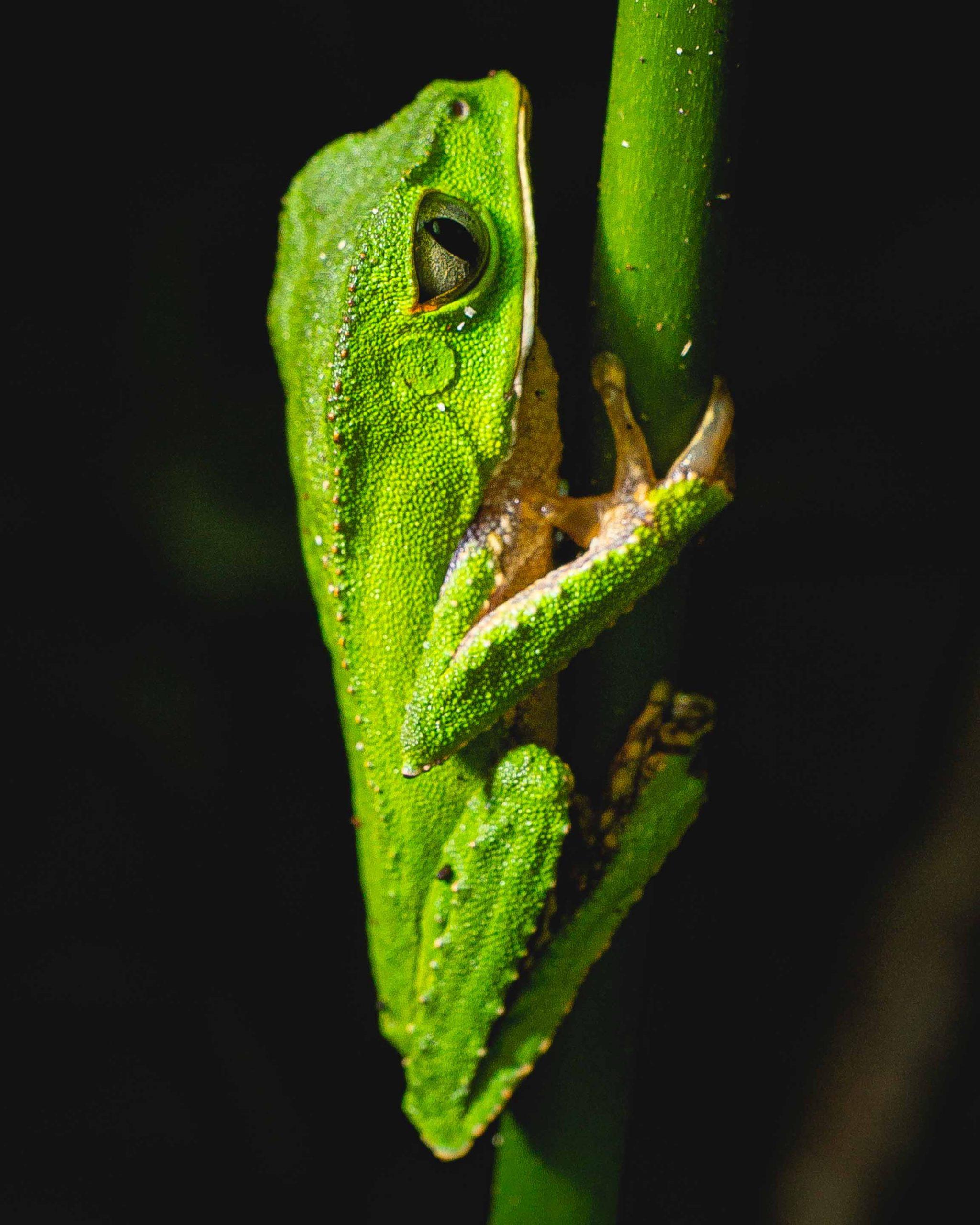 Peru: Rainforest Fauna