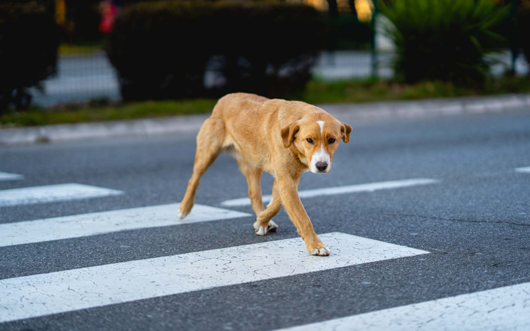 Podgorica: A day in the Life of a Stray