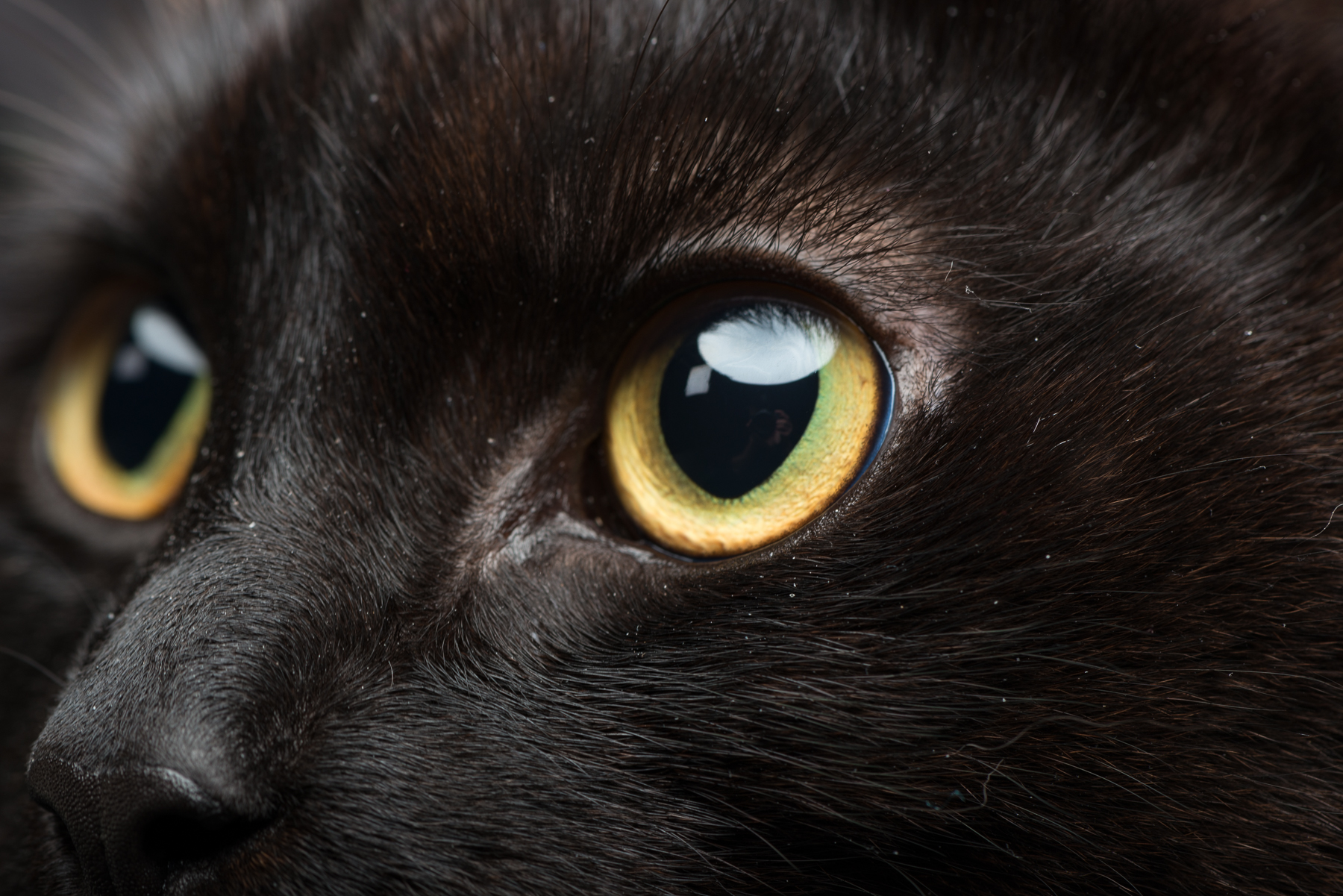 Studio: Cats